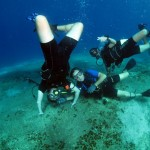 Seahorsedive moments